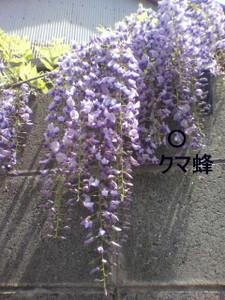 2012_04230010