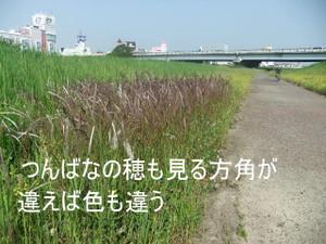 2013_05220008