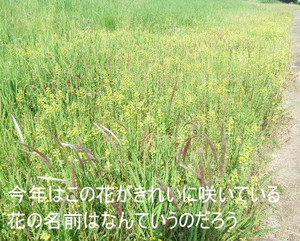 2013_05220009