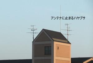 2013_07120002