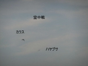 2013_07120063