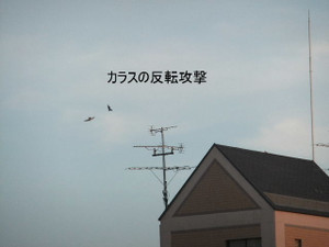 2013_07120067