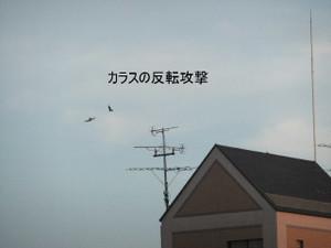 2013_07120067_2