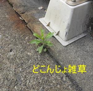 2014_05060029